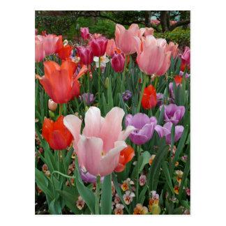 Tulipanes y pensamientos 2 tarjeta postal