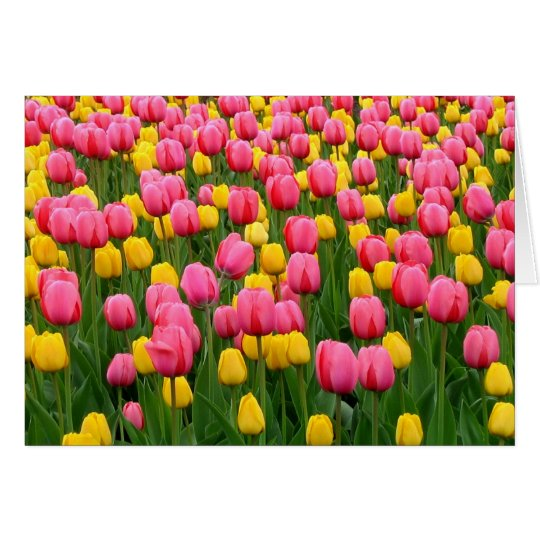 Tulips 1 Blank Greeting Card