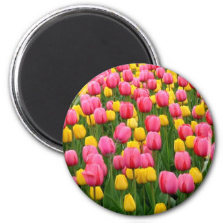 Tulips 1 Magnet