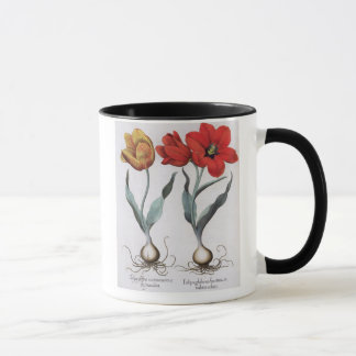 Tulips: 1.Tulipa globosa serotina cinnabrio colore Mug