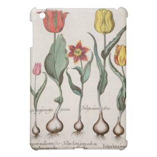 Tulips: 1.Tulipa lutea maculis rubens; 2.Tulipa au iPad Mini Cases