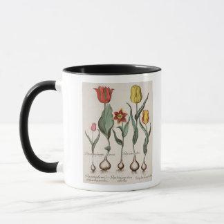 Tulips: 1.Tulipa lutea maculis rubens; 2.Tulipa au Mug