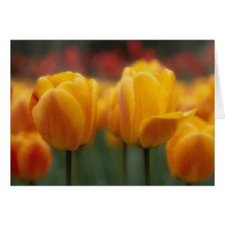 Tulips 2 card