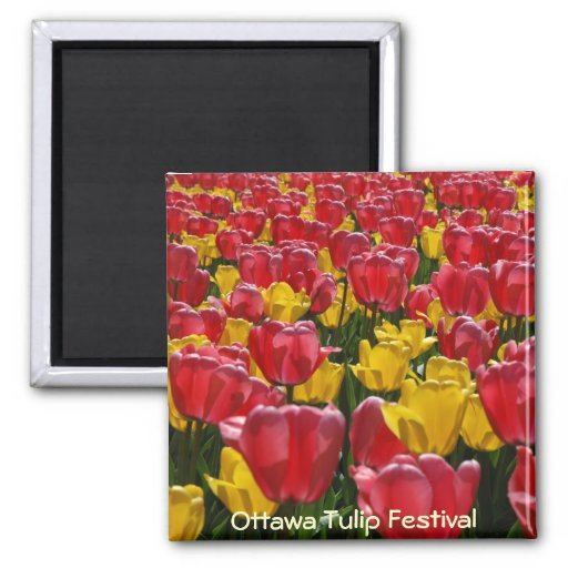 Tulips 2 Inch Square Magnet