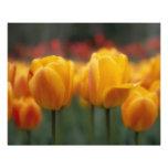 Tulips 2 photo print