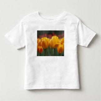 Tulips 2 shirt
