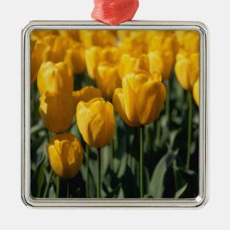 Tulips 3 ornament