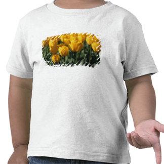 Tulips 3 t-shirt