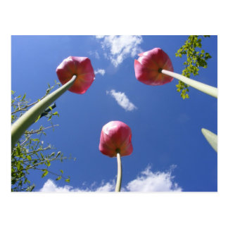 Tulips 3  'Worms eye view' ~ postcard