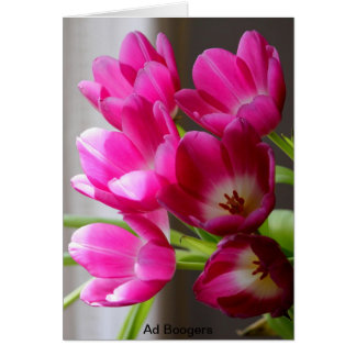 tulips 6pack card