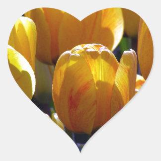 Tulips aglow heart sticker