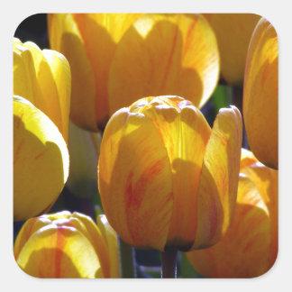 Tulips aglow square sticker