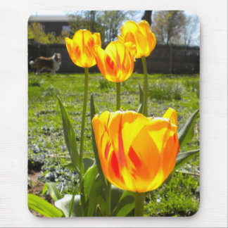 Tulips and a Collie Mouse Pad