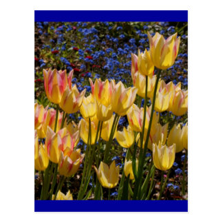 Tulips and Forget-me-nots Postcard