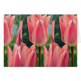 Tulips and MS Card