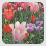 Tulips and Pansies 2 Square Sticker
