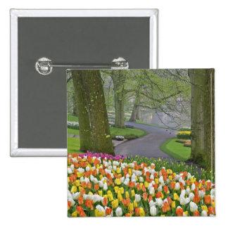 Tulips and roadway, Keukenhof Gardens, Lisse, Button