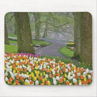 Tulips and roadway, Keukenhof Gardens, Lisse, Mouse Pad