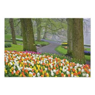 Tulips and roadway, Keukenhof Gardens, Lisse, Photo Art