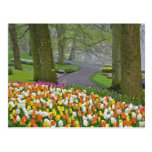 Tulips and roadway, Keukenhof Gardens, Lisse, Postcard