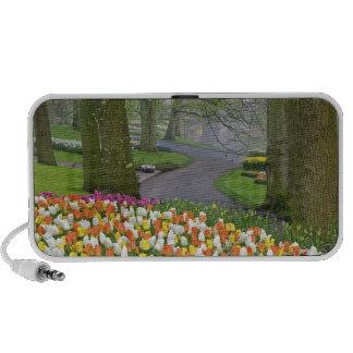 Tulips and roadway, Keukenhof Gardens, Lisse, Travelling Speaker