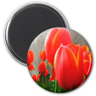 Tulips and Stone Refrigerator Magnets