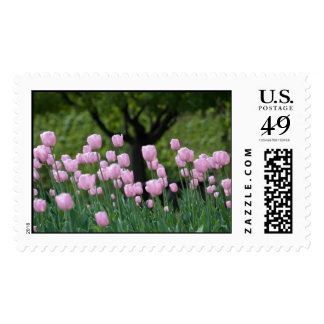 tulips and the tree postage