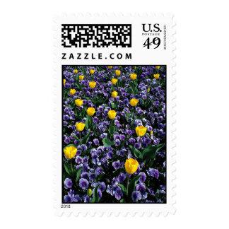 Tulips and violas postage