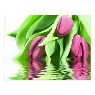 Tulips and Water Postcard