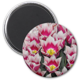 Tulips Are Better Then One 2 Inch Round Magnet