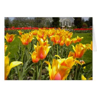 Tulips At Elizabeth Park Greeting Cards