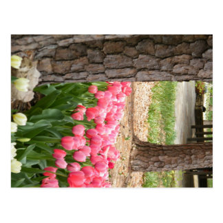 Tulips at Garvan Woodland Gardens Postcard