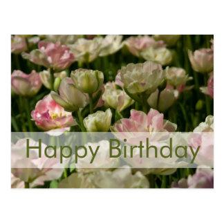 Tulips Birthday Postcard Geburtstagskarte Tulpen