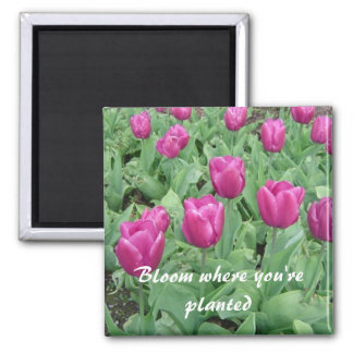 Tulips - Bloom Where You're Planted 2 Inch Square Magnet