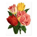 tulips blossoms vintage vines beautiful flowers postcard