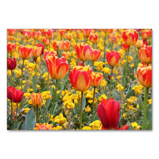 Tulips, Bright and colorful yellow and red Card