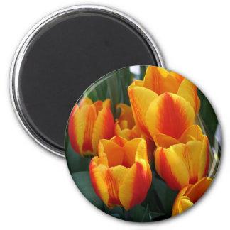Tulips, bright orange! 2 inch round magnet