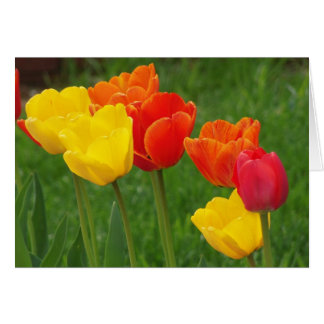 Tulips Brights Card