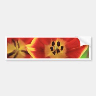 Tulips Car Bumper Sticker