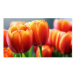 Tulips Double-Sided Standard Business Cards (Pack Of 100)