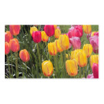 Tulips Business Card