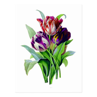 Tulips by Pierre Joseph Redoute Postcard