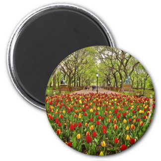 Tulips Central Park NYC Magnet