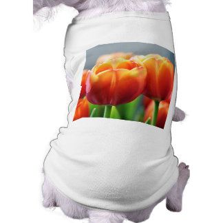Tulips Pet Clothes