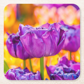 Tulips Enchanting Purple Square Paper Coaster
