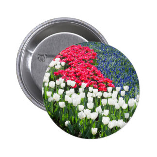 Tulips field in red and white with blue hyacinths pinback button