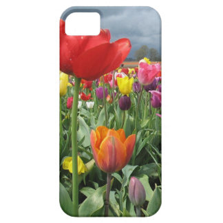 Tulips Field iPhone 5 Cover