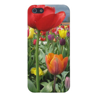 Tulips Field iPhone SE/5/5s Case