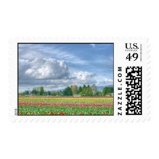 tulips fields with great sky postage