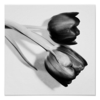 Tulips Fine Art Photography Print Black and White